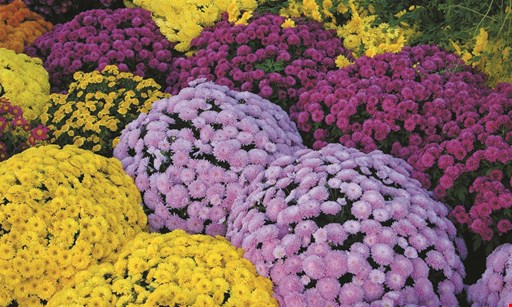 Product image for Greenridge GARDENS $20 OFF any purchase of $100 or more.