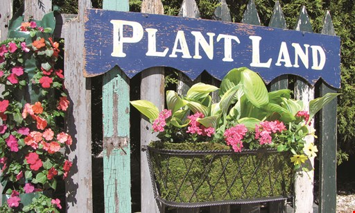 Product image for Plant Land $10 off any purchase