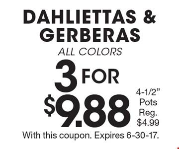 3 FOR $9.88 DAHLIETTAS & GERBERAS ALL COLORS 4-1/2