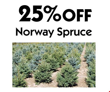 25% OFF Norway Spruce. With coupon. Not valid with other offers or prior purchases. Offers expire 6-15-18