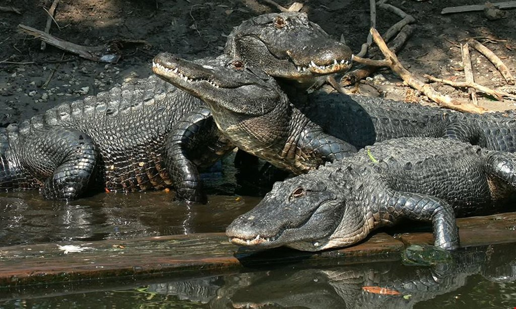 Product image for St. Augustine Alligator Farm $14 for One Admission to The Alligator Farm (Reg $28)
