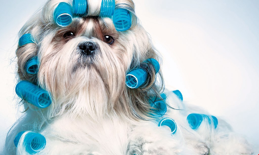 Product image for Clarence Pet Grooming $27.50 For $55 Towards Pet Grooming Services