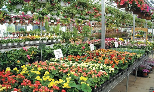 Product image for Gullo's Garden Center $15 For $30 Toward Flowers, Shrubs & Gardening Goods
