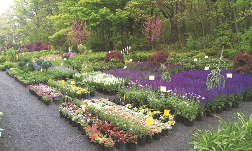 Product image for Rave Discount Plant Center $50 For $100 Toward Shrubs, Trees & Perennials