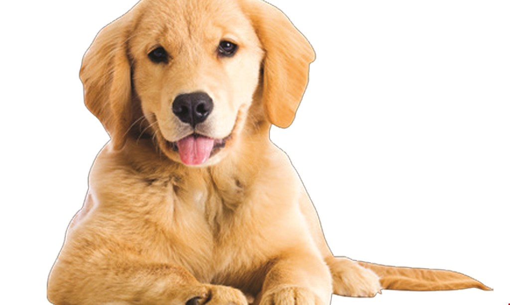 Product image for Walkers Pet Hotail $65 For 5 Days Of Doggie Daycare (Reg. $130)