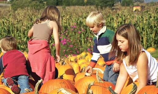 Product image for Lucas Bros. Farms $26 For A Family Of 4 For Hayride, Corn Maze & Small Pumpkin (Sept. 25-Nov 1, 2020) (Reg. $52)
