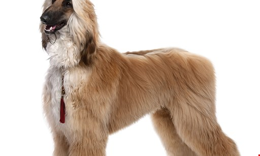 Product image for Paws Puppy Palace $20 For $40 Toward Grooming Services & Day Care Packages