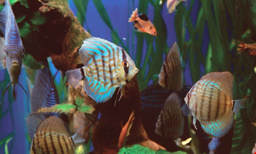 Product image for Fish Galore Critters & More $35 for $70 Worth Of Any Store Merchandise