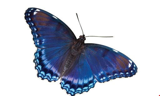 Product image for Philadelphia Insectarium and Butterfly Pavilion $21.90 For Admission For 4 (Reg. $43.80)