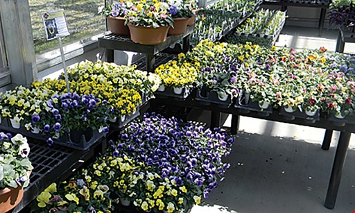 Product image for Good Harvest Supply $10 For $20 Toward Flowers & Garden Supplies