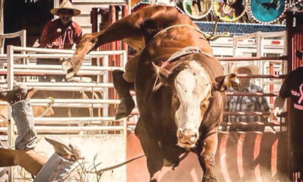 Product image for Paradise Ranch Bull Riding $20 For Rodeo Admissions For 4 (Reg. $40)