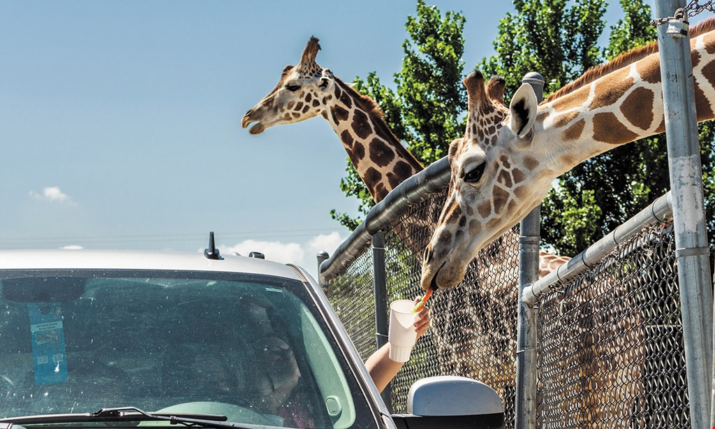 Product image for African Safari Wildlife Park $23.95 For 2 Admissions To African Safari Wildlife Park (Reg. $47.90)