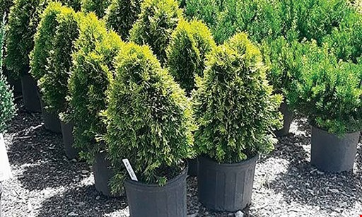 Product image for Superior Wholesale Landscape Supply $25 For $50 Worth Of Landscaping Supplies, Plants & Trees