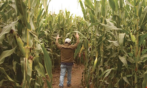Product image for Schuyler Farms $16 For 4 Admissions to the Regular Corn Maize 2020 Season 9/1 - 10/25 (Reg. $32)
