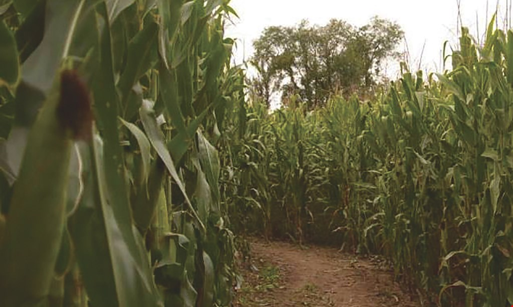 Product image for Schuyler Farms $20 For 4 Admissions to the Regular Corn Maize 2021 Season (9/1 - 10/29/2021) (Reg. $40)