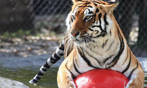 Product image for Big Cat Habitat $18 For 2 Admissions (Reg. $36)