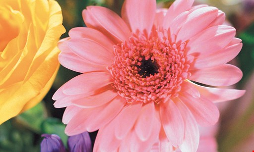 Product image for Farmstead Flowers $10 For $20 Toward Greenhouse Flowers, Plants & More