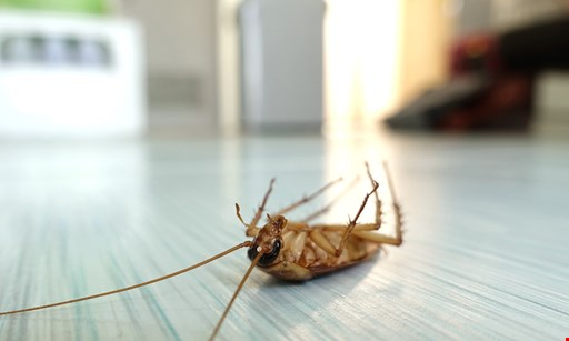 Product image for Earth Right Exterminating $200 for 6 months of pest control ($400 value)