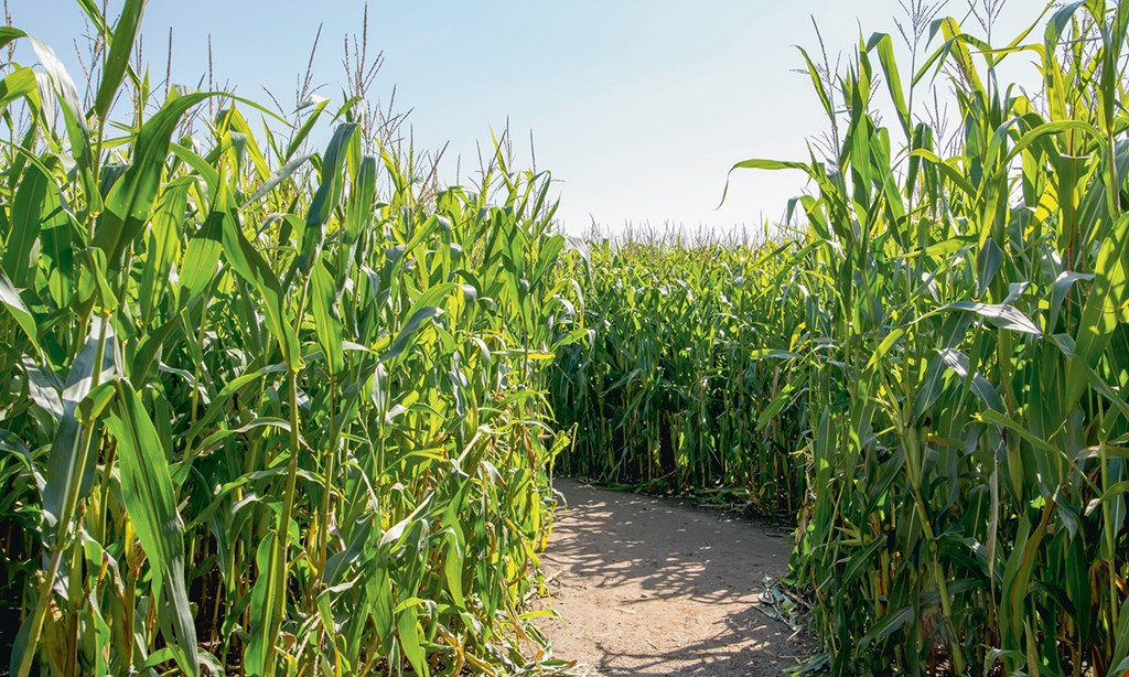 Product image for The Corn Maze at Oregon Dairy $12 For 2 Adult Admissions To The Corn Maze (Reg. $24)