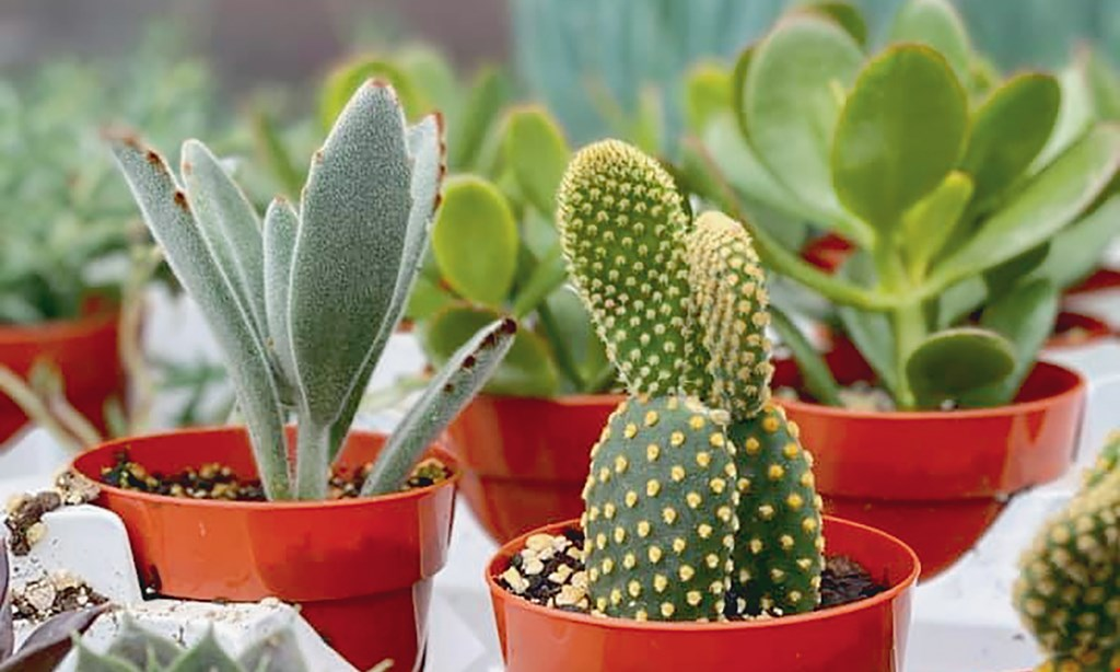 Product image for Farmer Stan's Plants & Produce $15 For $30 Worth Of Plants, Produce & Retail