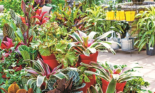 Product image for 4 Seasons Garden Center $25 For $50 Towards Plants