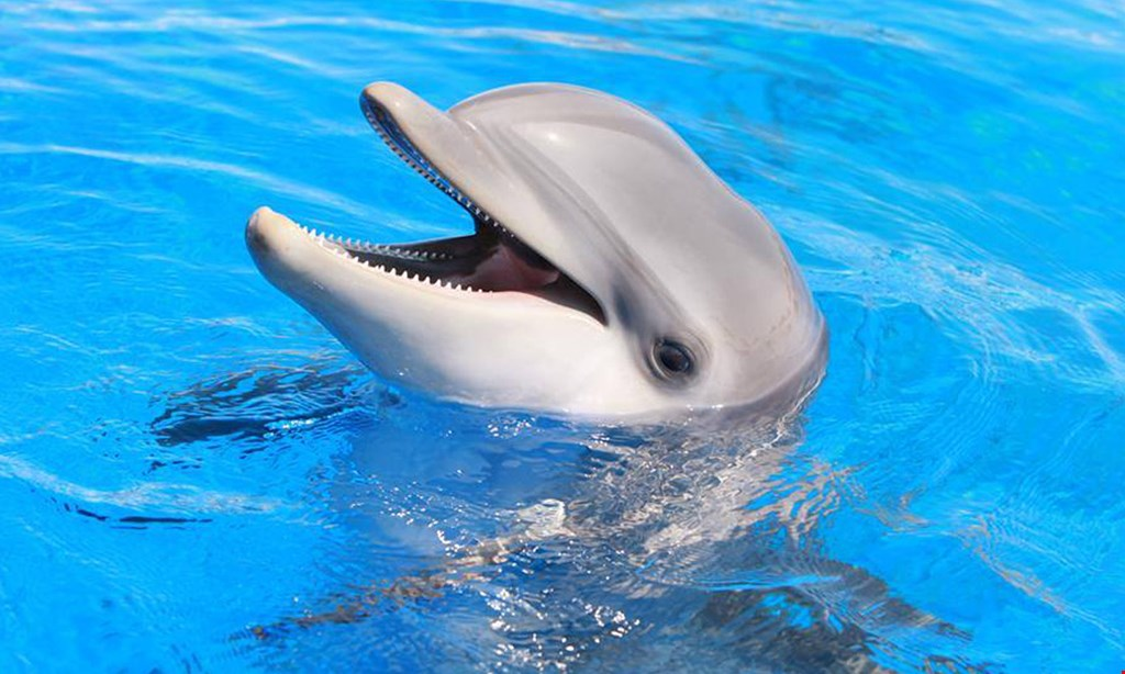 Product image for Marineland $79.50 For A Swim With The Dolphins Adventure (Reg. $159)