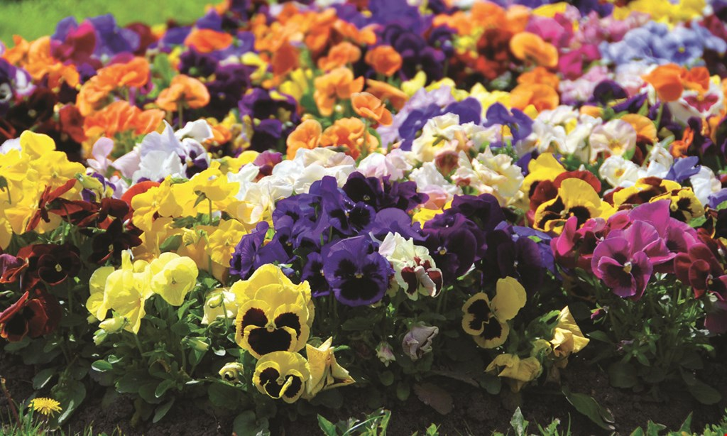 Product image for Burke Garden Centre $40 For $80 Toward Your Choice Of Plants & Supplies
