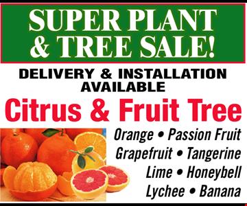 SUPER PLANT & TREE SALE!  CITRUS & FRUIT TREE! Orange • Passion Fruit • Grapefruit • Tangerine • Lime • Honeybell • Lychee • Banana. Delivery & Installation available