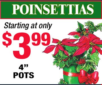 Poinsettias! starting at $3.99 4