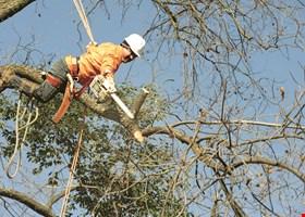 Meinharts Tree Service