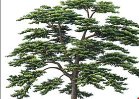 Parker Tree Service