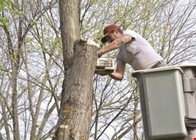 A Plus Tree Service, Inc