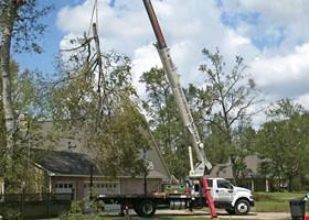 RPR Tree Service LLC & Tree Trimming