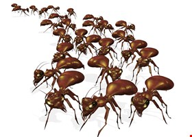 Tim Mills American Pest Control Co.