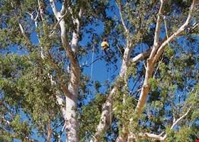 Sam's Tree Service