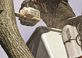 Powell Property Maintenance & Tree Service