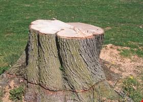 International Arbor Care