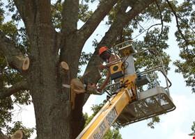 Busy Beaver Tree Service