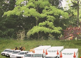 Bishop's Tree Service, Inc.