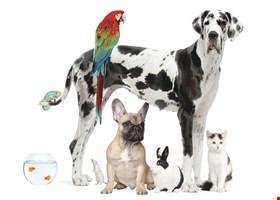 Huron Pet Supply