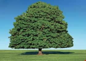 Paradise Tree Service