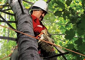 Sesmas Tree Service