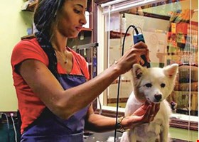 Naya's Pet Place