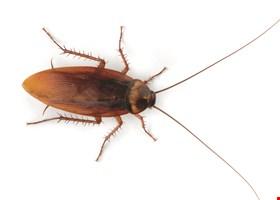 Pest Pros
