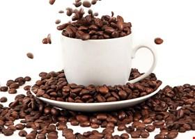 Safari Coffee Roasters