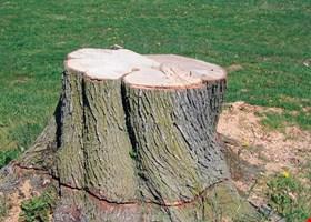 Serrano Tree Service