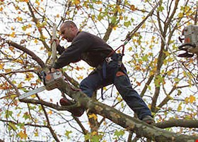 Green Plant Tree Service
