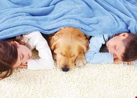 Carlson's Carpet Care