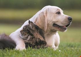 Morgan's Paws Pet Care Center