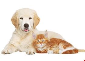 Three Amigos Healthy Pet Supplies